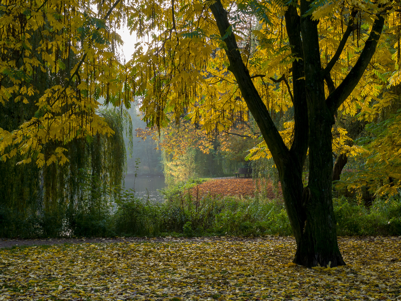 Autumn mood at the pond
